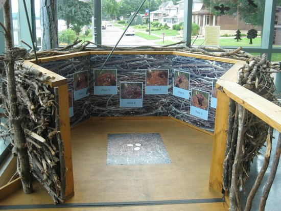 National Eagle Center : from eaglet to eagle display