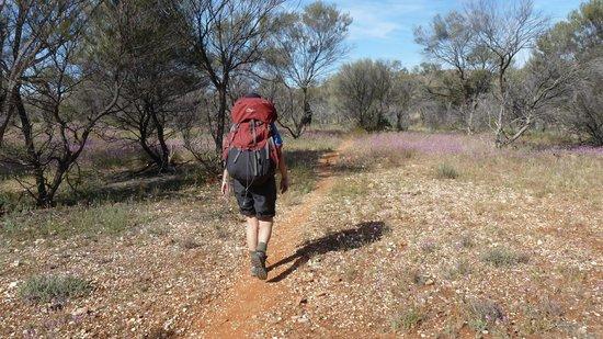 The Larapinta Trail: Desert Trail