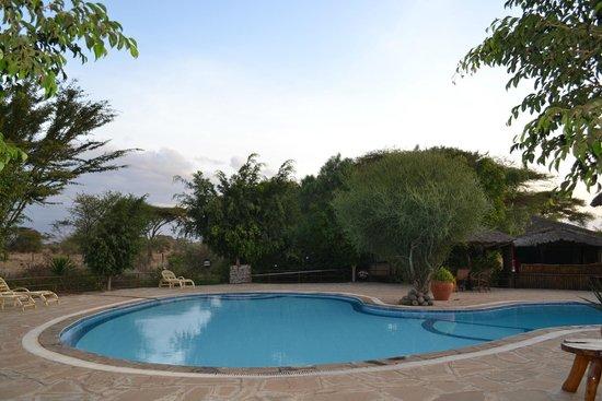 Kibo Safari Camp : Pool area