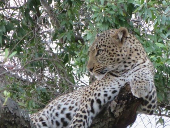Great Plains Conservation Mara Plains Camp: Kitty