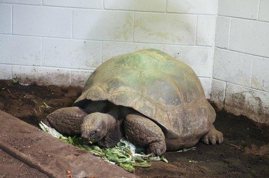 Auckland Zoo: very big
