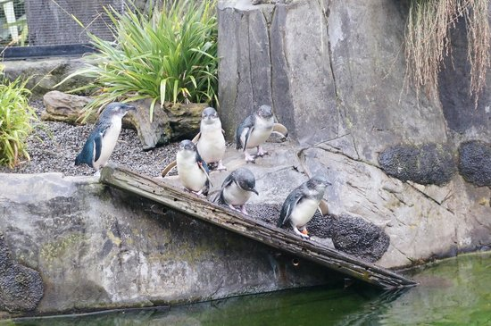 Auckland Zoo : So cute