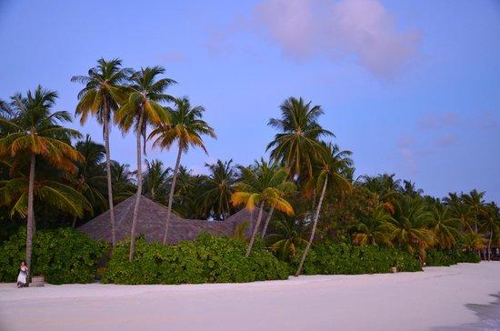 Beach - Picture Of Veligandu Island Resort  U0026 Spa