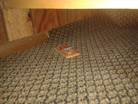 The Lodge at Lolo Hot Springs : Mouse trap under sink.