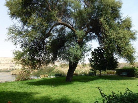 LTI - Pyramisa Isis Island Resort & Spa: Arbre centenaire dans le jardin