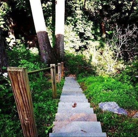 West Ridge Hollow B&B: Trail in the backyard