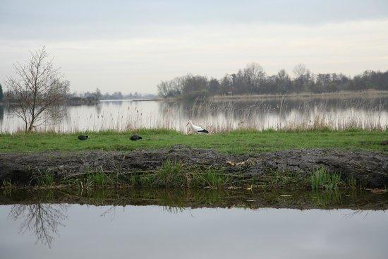 Reeuwijkse Plassen: birds in Reeuwijk