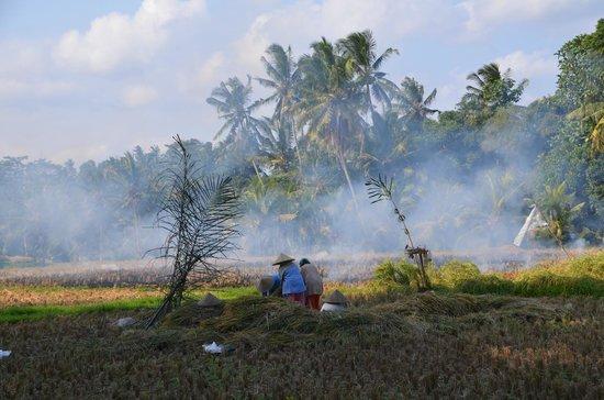 Villa Taman di Blayu: Anti moustique local