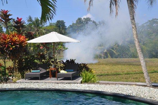 Villa Taman di Blayu: Encore les rizières