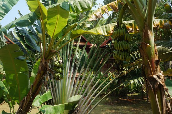 Good Time Resort Koh Mak: Tropical Plants in our park