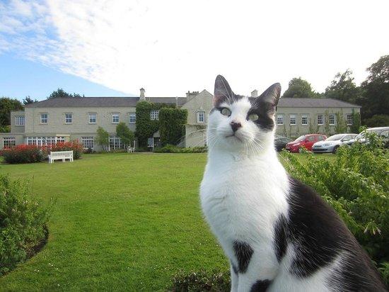Gregans Castle Hotel: The Boss....keeping an eye on the Donkey in the field.