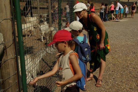 Parc Zoologique de Frejus : on donne à manger