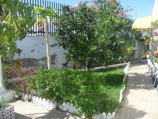 Santa Clara Bungalows: Side Garden of our bungalow