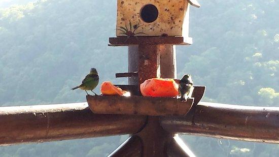Pousada Terraco Penedo: Pássaros no café da manhã