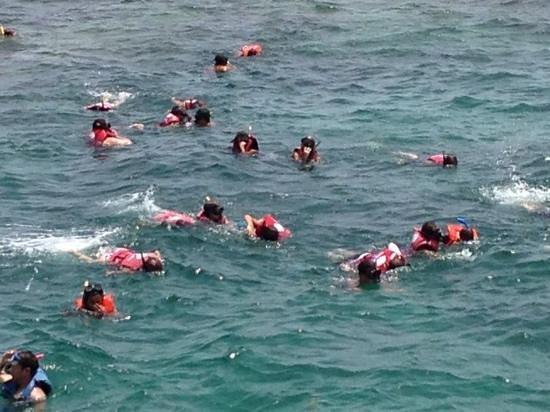 Ocean Adventures Stingray Bay Caribbean Festival : Snorkeling