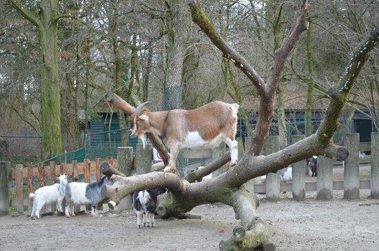 Tierpark Hellabrunn: 3