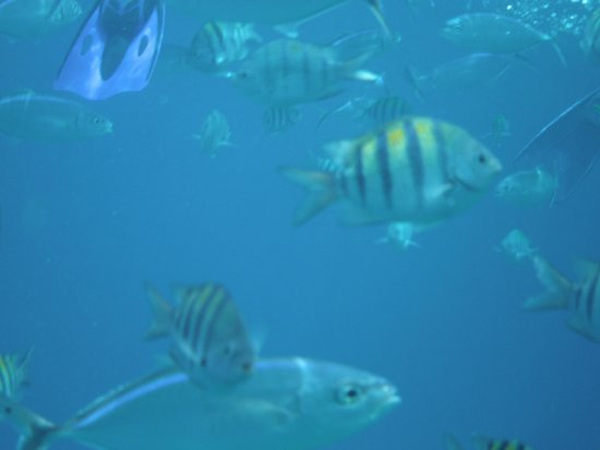 FE Catamaran Sail and Snorkel Cozumel: Fish