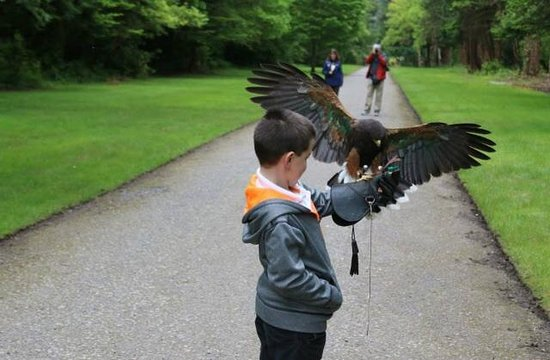 My son enjoying Ireland's School of Falconry