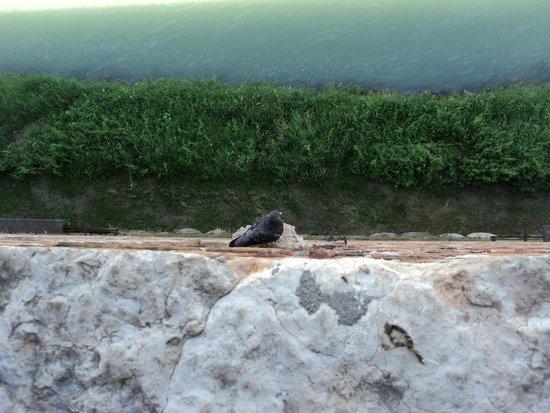 Ponte Scaligero: On the walls