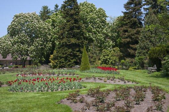 Niagara Parks Botanical Gardens: тюльпаны уже отцветают