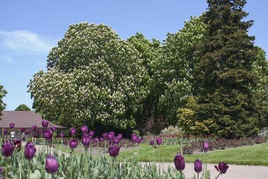 Niagara Parks Botanical Gardens: ботанический сад