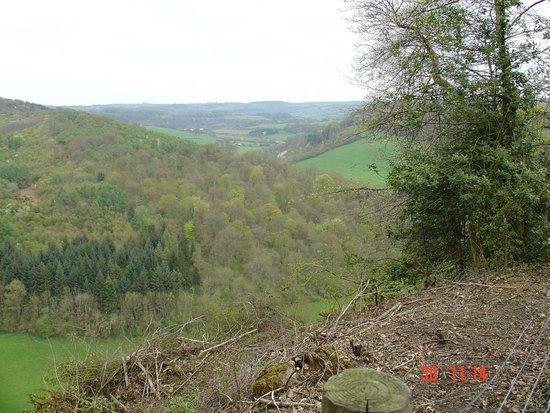 Royal Forest of Dean: More scenery than you can shake a stick at