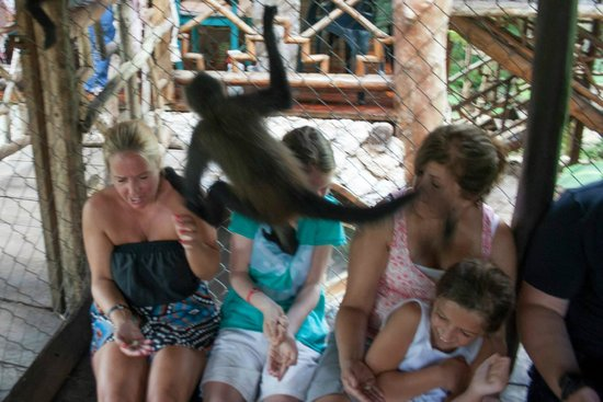 The Jungle Place - Tours: Dive bomb by Maya