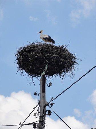 Soncna Hisa Boutique Hotel: stork