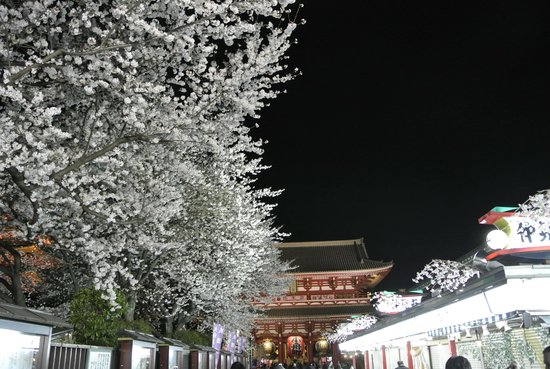 Senso-ji Temple: 仲見世と雷門前の夜桜