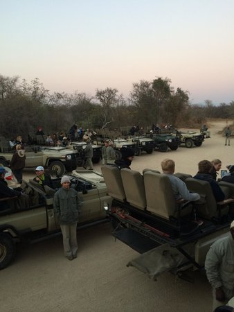 Kapama River Lodge : Safari