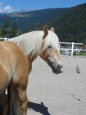 Hotel Atzinger: L'Arena Stubai et ses chevaux travaillent avec l'hôtel
