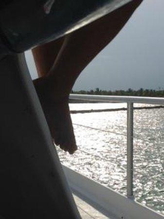 Catamaya Sailing Cruises: Atardecer desde el catamaran