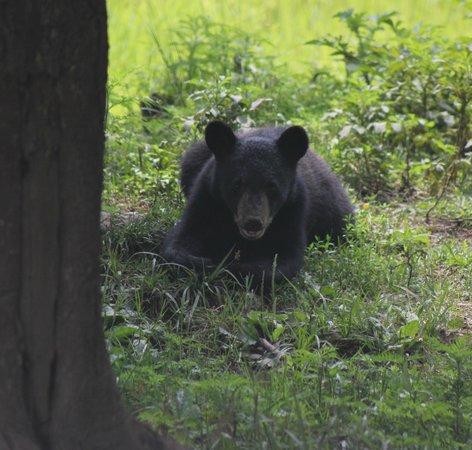 Omega Park: bear cub