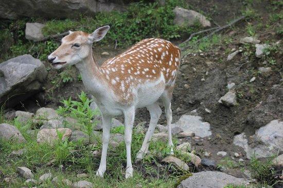 Parc Oméga : deer eating carrot