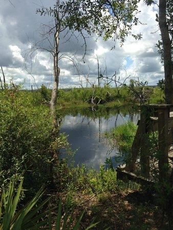 Okefenokee Swamp Park Suwannee Canal ...