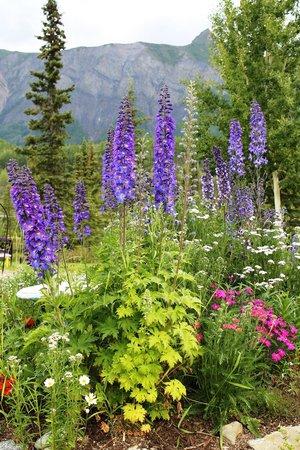 Matanuska Lodge: flowers