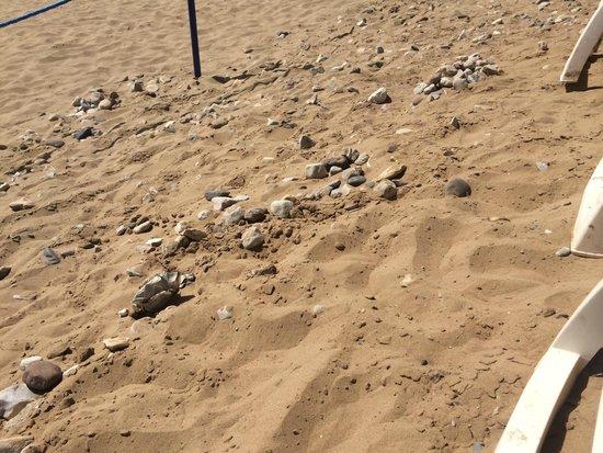 "Iberostar Founty Beach: Plage ""privée"""