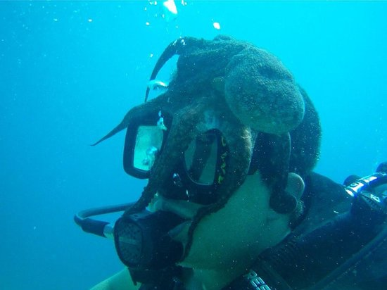 Silent World Divers: Octopus on the head! :-)