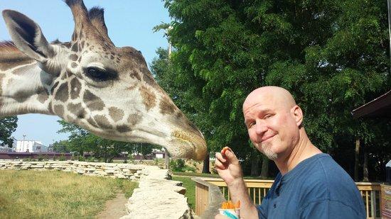 Timbavati Wildlife Park: Up close with a giraffe
