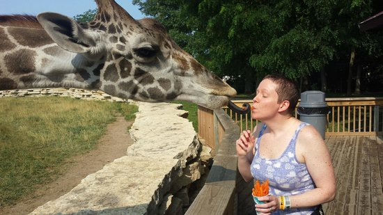 Timbavati Wildlife Park: Feeding the giraffes was the best!
