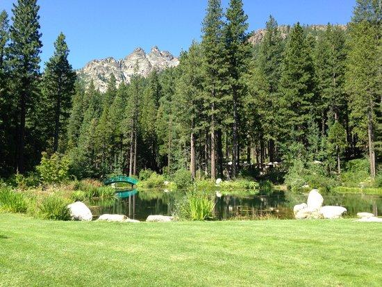 Big Springs Gardens: View under the Sierra Buttes