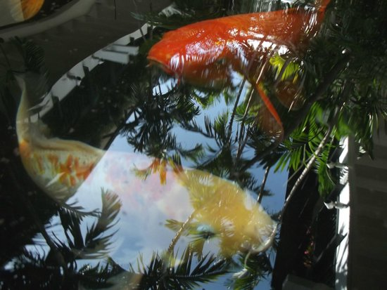 Miami Beach Botanical Garden : Uno de tantos jardines.