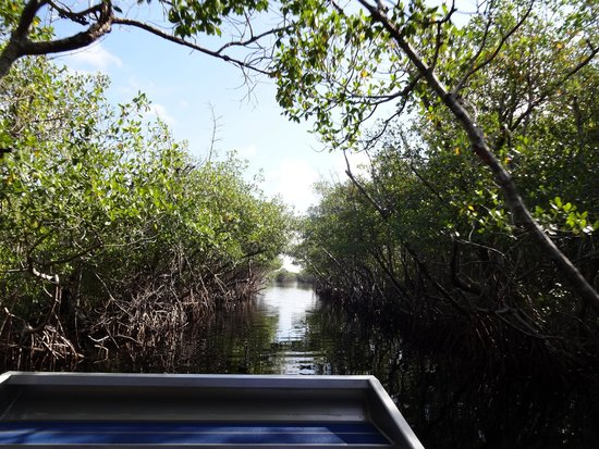 Everglades City Airboat Tours: a view from the boat...a fun ride!