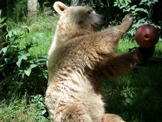 Dartmoor Zoological Park: Bear