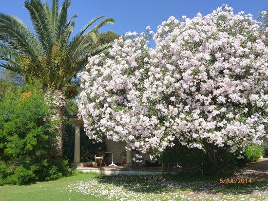 Hotel Costa dei Fiori: Lleno de flores, de ahí su nombre