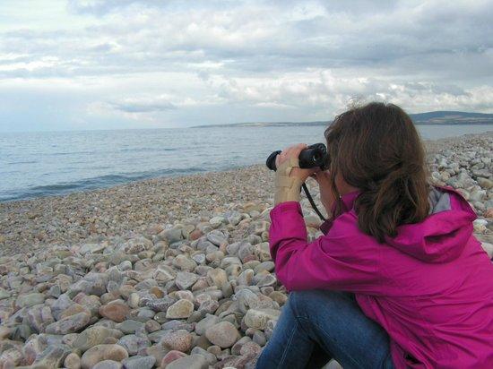 WDC Scottish Dolphin Centre: Dolphin spotting