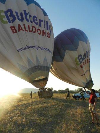 Butterfly Balloons: decolando