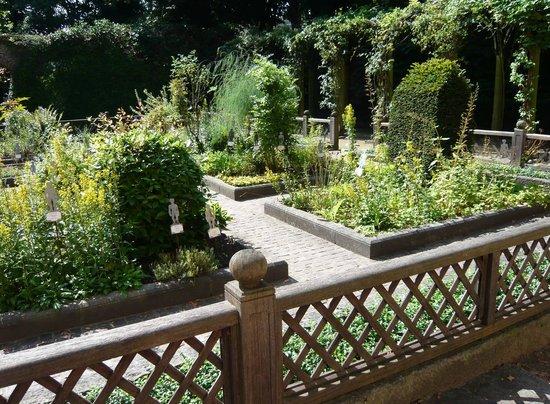 Jardin aux plantes m dicinales photo de maison d 39 erasme for Jardin 16eme