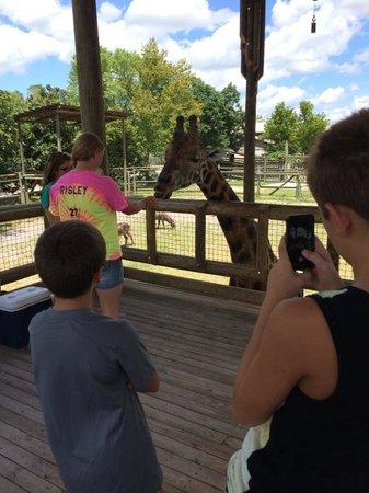 Zoo Knoxville: Giraffe Encounter