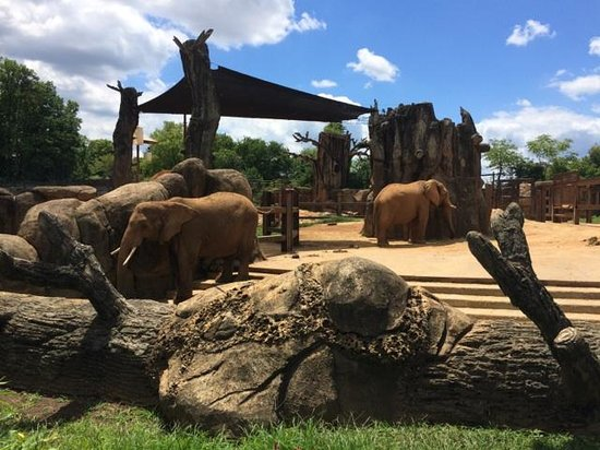 Zoo Knoxville: Elephants